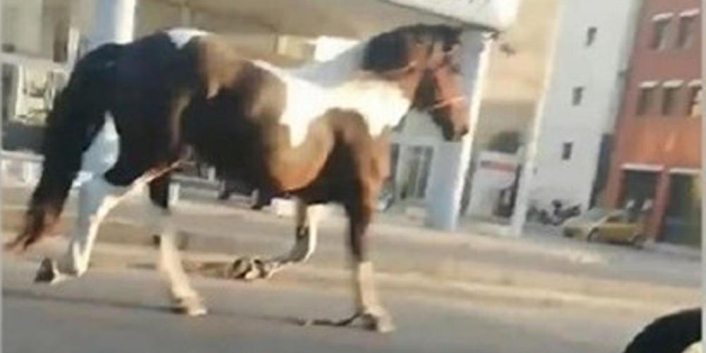 Ένα άλογο κόβει βόλτες μόνο του στο κέντρο της Θεσσαλονίκης! [βίντεο]