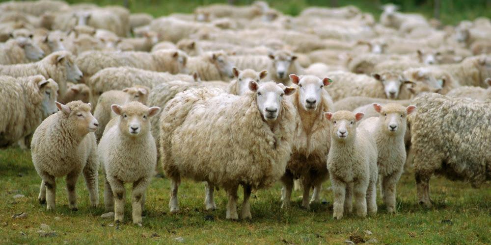 Απίστευτο: Ελάφια επιτέθηκαν και σκότωσαν πρόβατα στη Λήμνο [βίντεο]