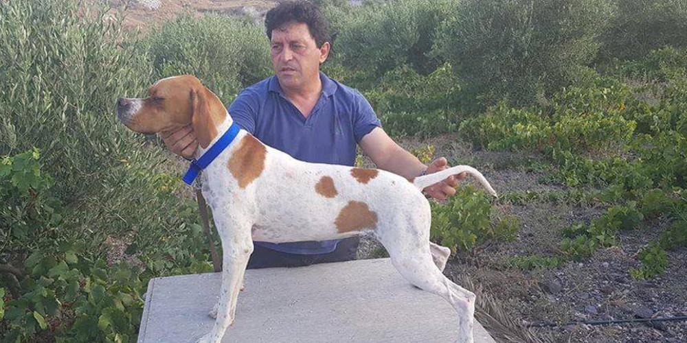 Χάθηκαν δύο σκυλάκια στο Καμάρι - Βοηθήστε να βρεθούν