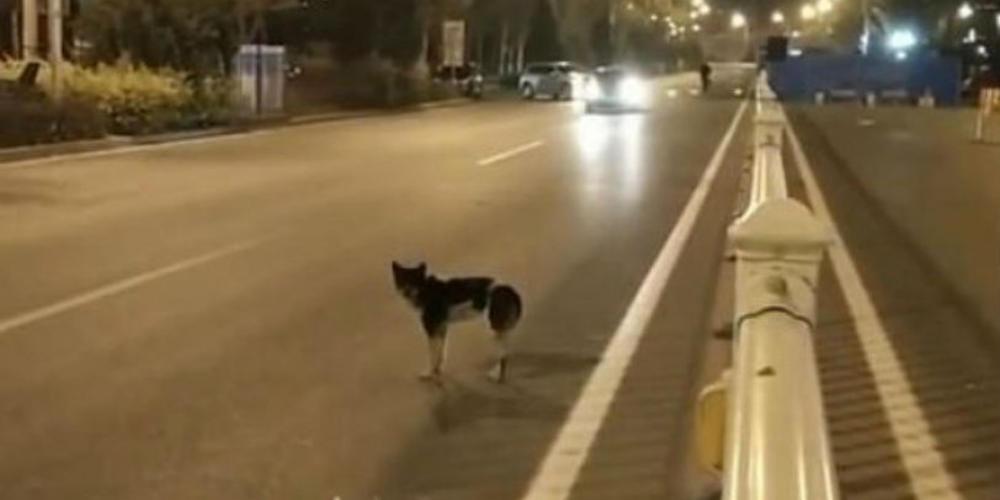 Σκύλος περιμένει επί 80 μέρες στο σημείο που σκοτώθηκε το αφεντικό του
