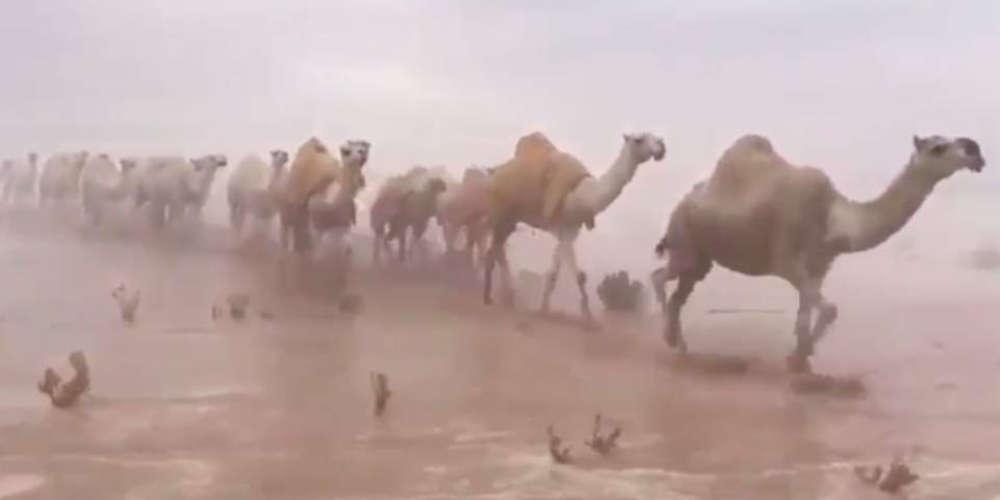 Τα... έχασαν και οι βεδουίνοι από την πλημμυρισμένη έρημο της Σ. Αραβίας